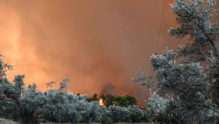 Ολονύχτια μάχη με τις φλόγες στην Εύβοια!