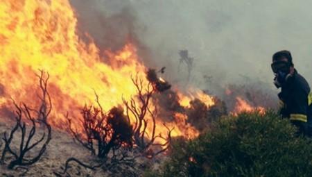 Φωτιά στη Δαφνιώτισσα Αμαλιάδας! (pics)
