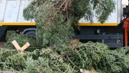Ανακύκλωση φυσικών Χριστουγεννιάτικων δέντρων από τον Δήμο Πειραιά!