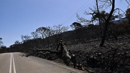 Συναγερμός για τη πυρκαγιά που ξέσπασε στην Κερατέα (video)