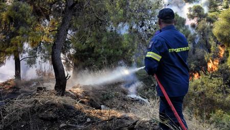 Συναγερμός στην Πυροσβεστική: Φωτιές σε Χαλκίδα και Αργολίδα